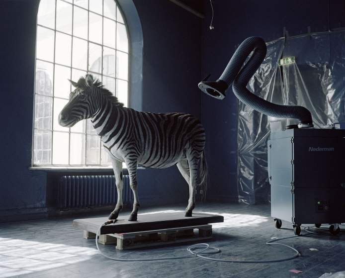 A moveable beastThe exhibitions in the Natural History Collections in Bergen, Norway are undergoing a major restoration, and will be closed for at least five years. Due to this all the animals are beeing moved to a new temporary storage facility on the