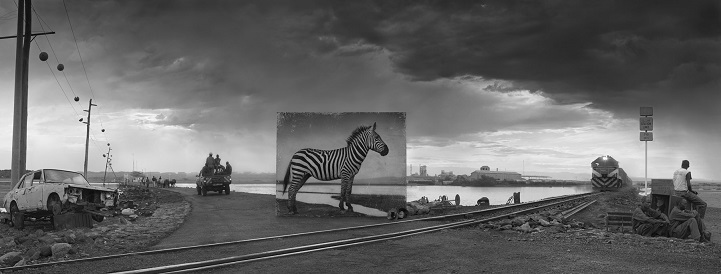 Nick Brandt inherit the dust afrika dogal yasam alani hayvanlar istila 11