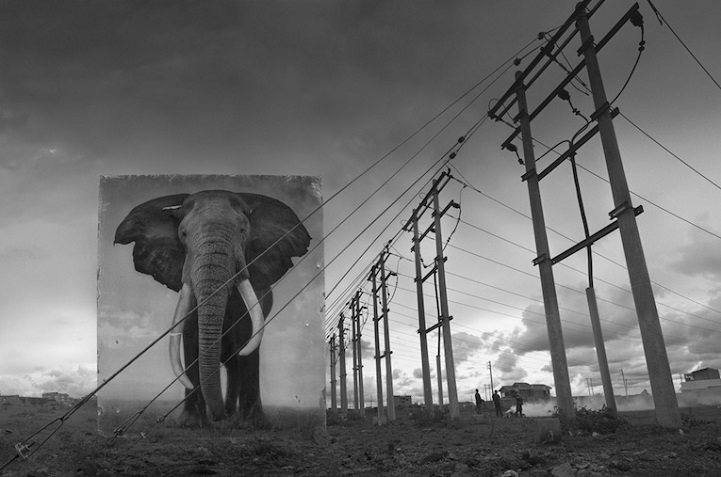 Nick Brandt inherit the dust afrika dogal yasam alani hayvanlar istila 4