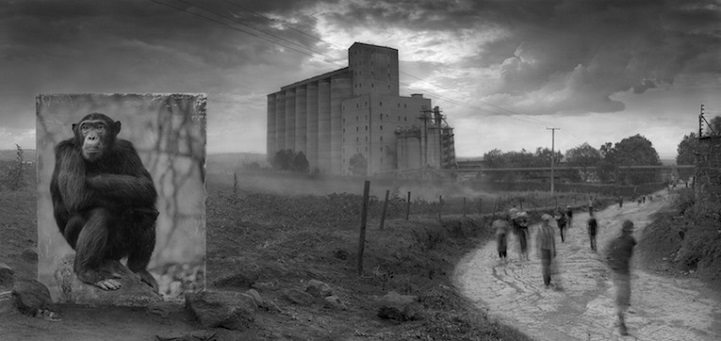 Nick Brandt inherit the dust afrika dogal yasam alani hayvanlar istila 5