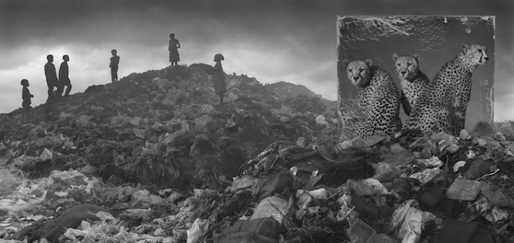Nick Brandt inherit the dust afrika dogal yasam alani hayvanlar istila 8