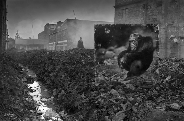 Nick Brandt inherit the dust afrika dogal yasam alani hayvanlar istila 9
