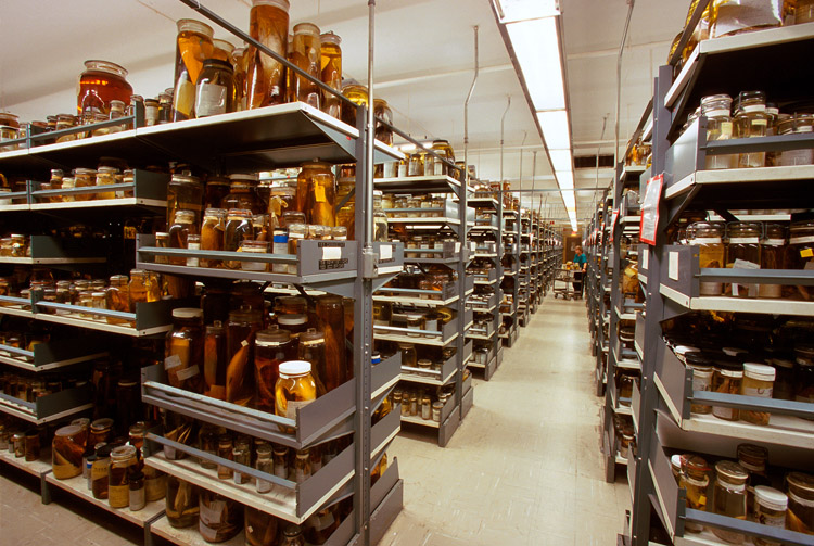 The Department of Vertebrate Zoology's wet collections of fish specimens preserved in alcohol, located at the Smithsonian Institution's National Museum of Natural History.