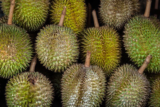 Durian fruit in market